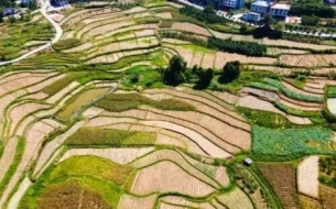 2021年全球农业市场需要了解的8件事